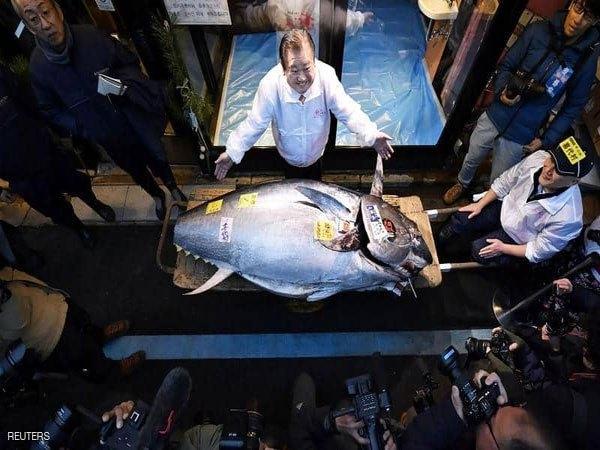 1,8 مليون دولار ثمن سمكة تونه عملاقة