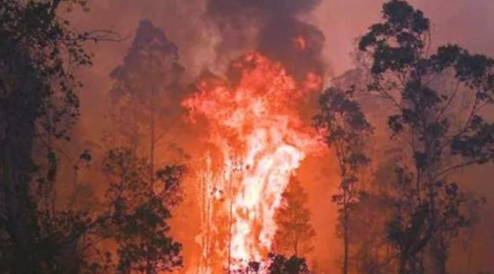 اليابان تساهم في مكافحة حرائق الغابات بأستراليا